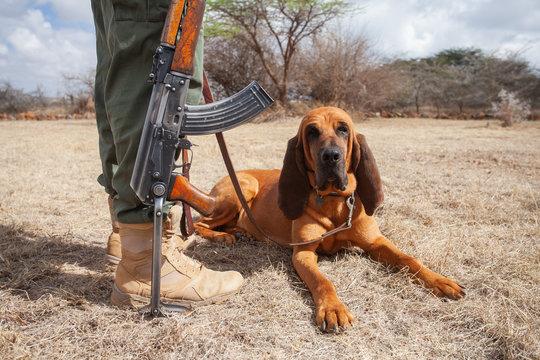 दुनिया के 10 सबसे खतरनाक कुत्ते ब्लड हुंड (Bloodhound)