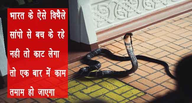 भारत के सबसे घातक और जहरीले साँप most venomous and dangerous snakes found in india